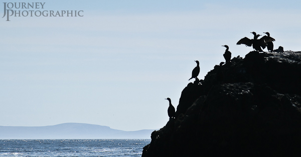 Silhouette of Birds, Blasket Islands