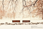 Picture of benches in Major's Hill Park in Ottawa during a snowstorm, Ottawa