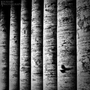 Black and white picture of Birds in Motion, St Peter's Square