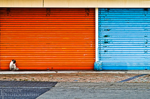 Picture of a pug dog in front of orange and blue roller door, Lantau Island, Hong Kong