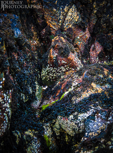 Picture of rocks covered with barnacles, seaweed, algae and lichen, Little Gruinard Beach, Scotland