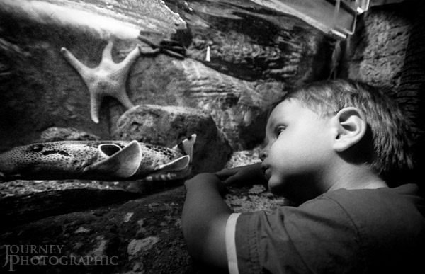 Black and white portrait of Eli at the National Zoo and Aquarium, Canberra