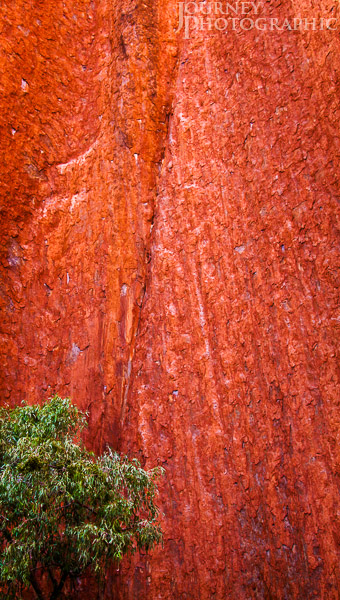 Landscape picture of gum tree and red rock, Uluru, Central Australia