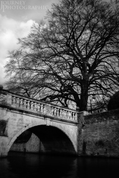 Black and white picture of Clare Bridge and Tree, Cambridge, Englnd