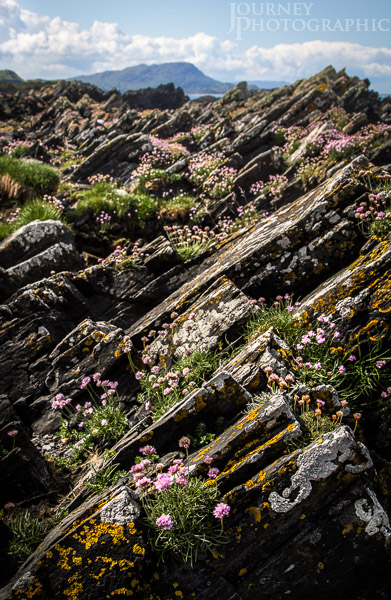 Picture of Slate and Flowers, Ellenabeich / Easdale, Scotland