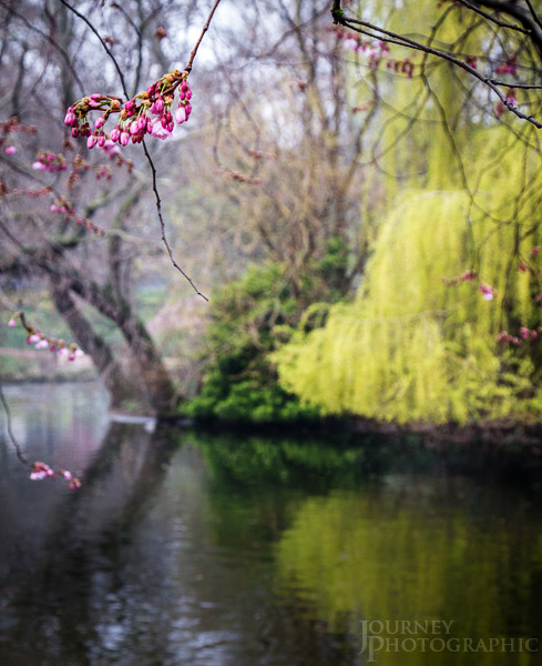 Picture of lake, St James Park, London