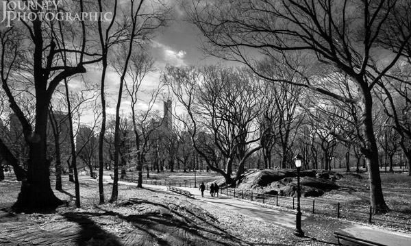 Black and white andscape picture of bare trees and path in Central Park, New York