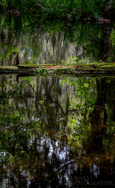 Landscape picture of log and reflections, Magnolia Plantation, South Carolina